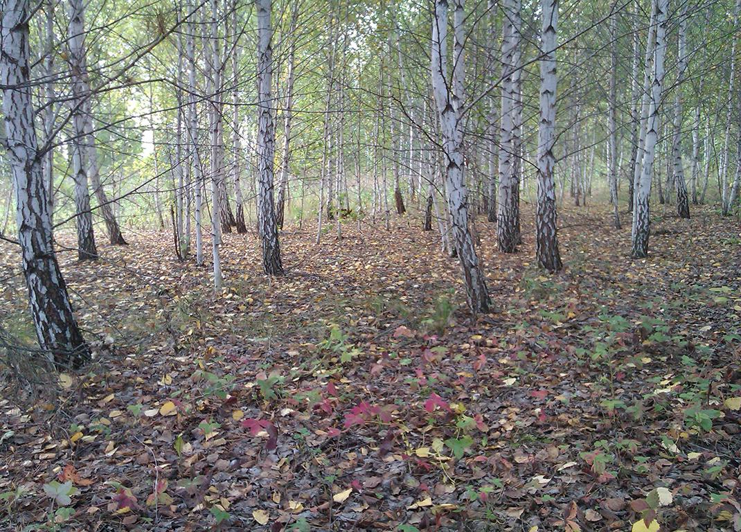 studio11-september-forest