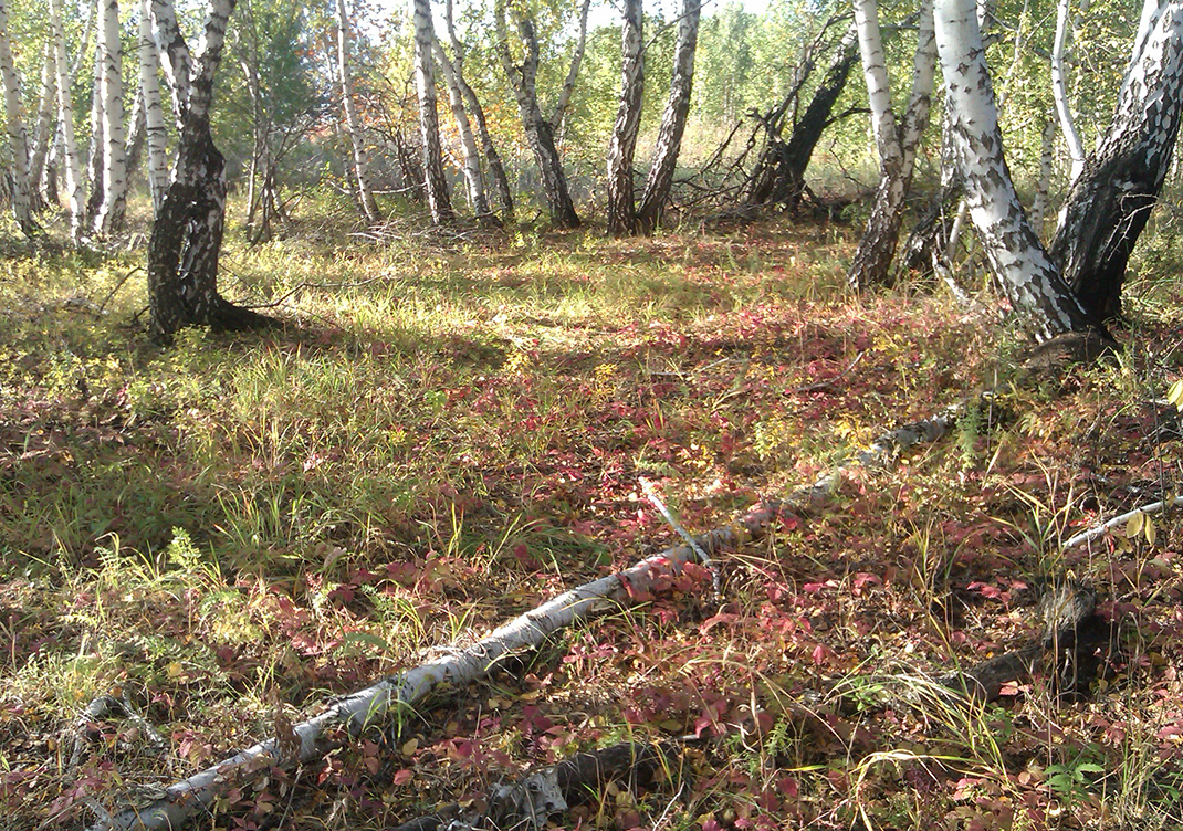 studio11-september-forest2