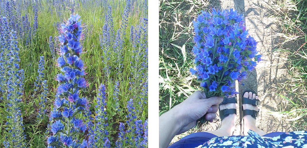 studioeleven-flowers-echium