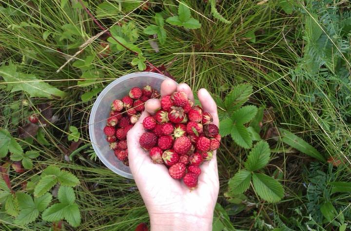 studioeleven-strawberries-2